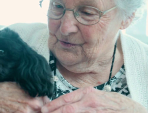Activities: Music & Pet Therapy